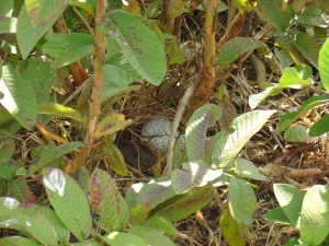 A bomblet hiding in a bush (MAG display).