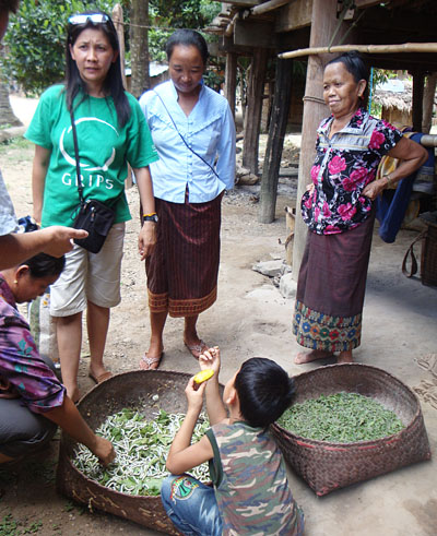 Mai, in green, translates for us as we learn about local sericulture.