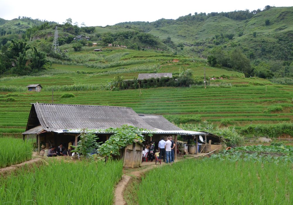 Sho's parent's house, site of the Hmong wedding, surrounded to the porch edge with rice fields.