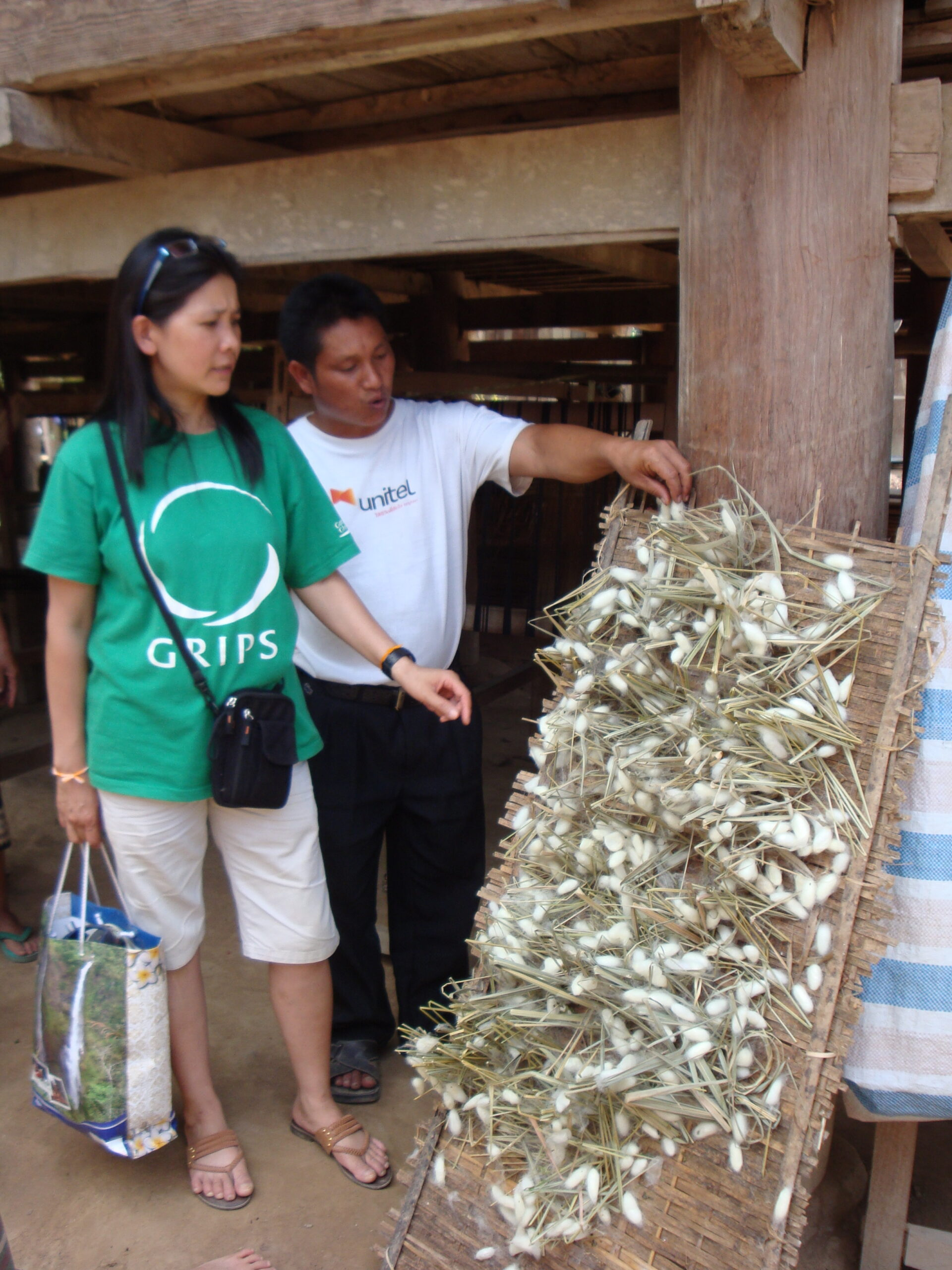 Our friend and translator Mai (in the green) and a seri-culture expert looking at the silkworms that are puinned to a board.  The worms are in the stage where they are actually making the precious silk.